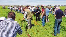 En la jornada en Oliveros los técnicos de la experimental guiaron un recorrido por el módulo agroecológico.