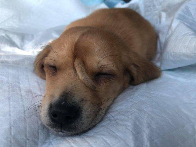 Un perro nació con una cola en la cabeza y fue abandonado