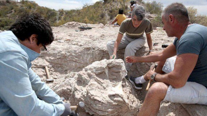 Una chica halló restos de un Titanosaurio de 85 millones de años en Neuquén