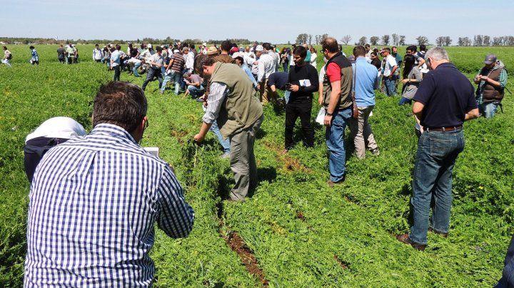 Experiencias. En Inta Oliveros tienen experiencia en cultivos agroecológicos.