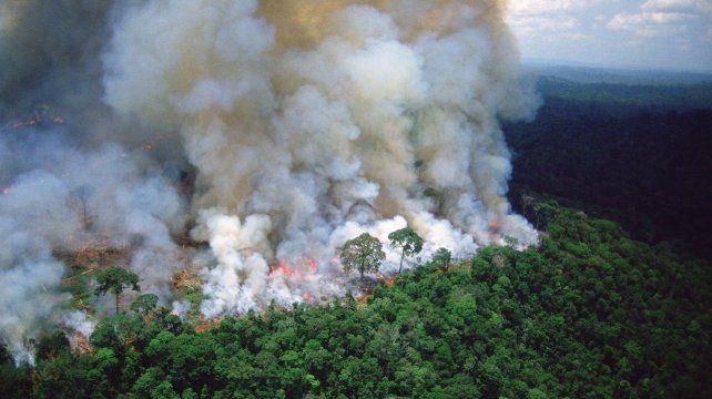 Riesgo. Los incendios de la selva del Amazonas afectan el ecosistema.