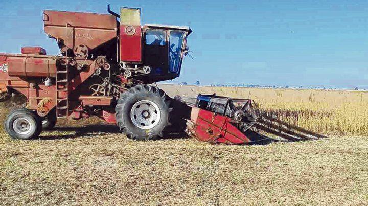 in situ. El productor agropecuario registró la imagen de la cosechadora utilizada para el hurto.
