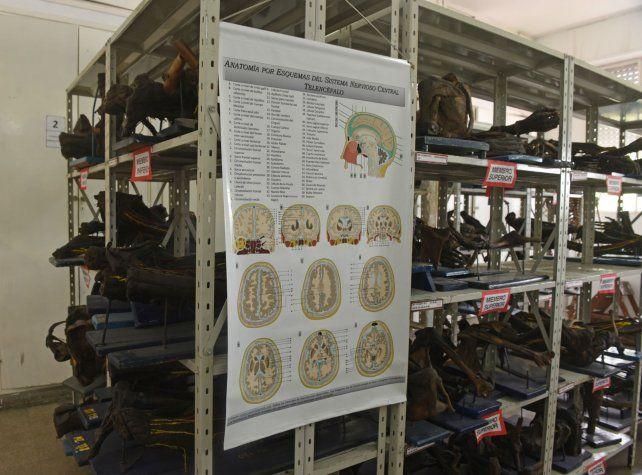 El enigma de Carmelita, la momia rosarina que se exhibe en Medicina