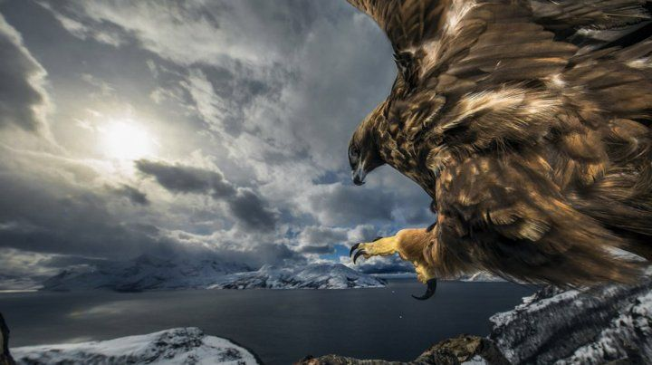Nature Photographer of the Year 2019