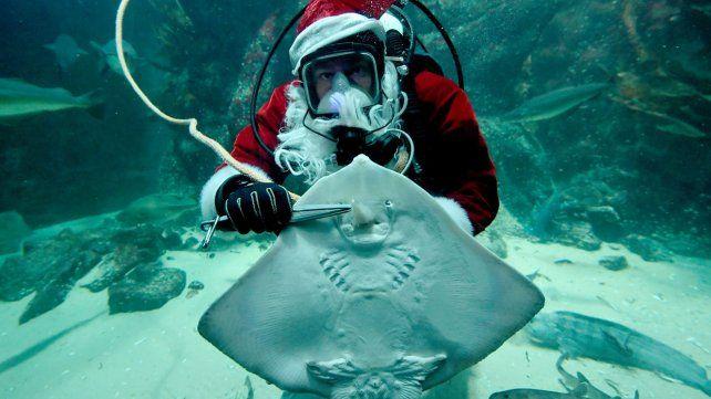 Santa Claus visita acuarios y ya recorre el mundo