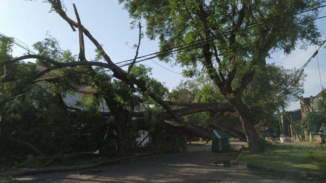 Un árbol que cayó anoche obstruye el tránsito en Maza y Herrera, en barrio Alberdi.