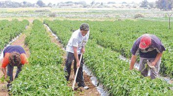 más débil. La concentración afecta a las producciones de pequeña escala, con menos de 50 hectáreas, que desaparecen.