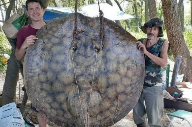 Pescaron una raya gigante de 153 kilos en el río Paraná