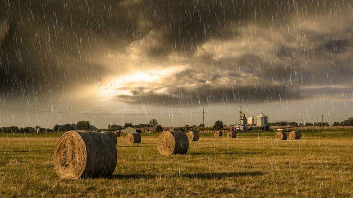 Cielo cubierto. Las últimas lluvias llegaron justo a tiempo para la campaña.