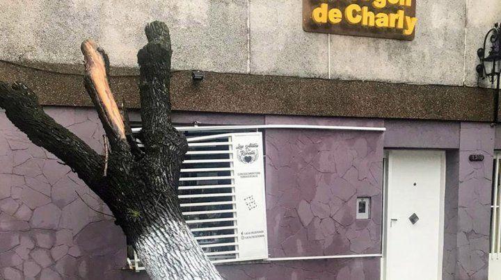 Cayó un árbol sobre la fachada de un negocio en el Abasto