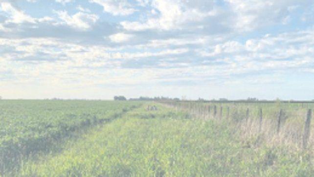 Vías vegetadas. Potencian biodiversidad en la región pampeana.
