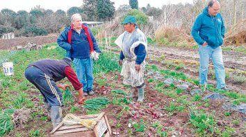 Horticultura. Las zonas de producción hortícola están ubicadas cada vez más lejos de los centros urbanos, por el alto costo de la tierra.