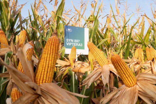 NK refuerza su campaña de maíz