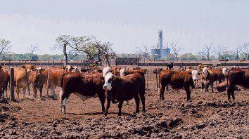Nivel. En los cuatro primeros meses del año hay un 6% más de animales faenados y 5% más de producción.