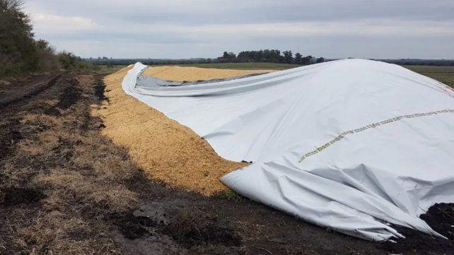Ante los recientes daños a silobolsas en la región productora de Santa Fe