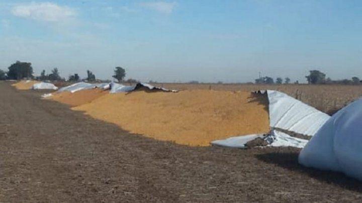 Vandalizaron silobolsas con soja y maíz.