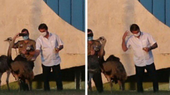 El momento en que el presidente Bolsonaro en picado por un ñandú. (Foto: @Estadao)