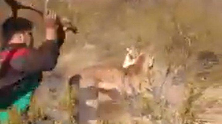 Las fuertes imágenes del ataque a palazos a un puma aturdido por el fuego en las islas