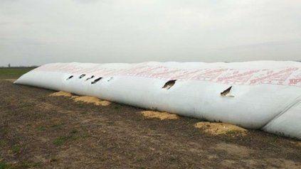 Control. Un silo bolsa puede dañarse por vandalismo, incendio, granizo.