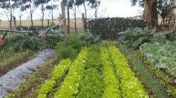 Comunidad. El programa nacional Prohuerta beneficia tanto a los productores como a los consumidores.