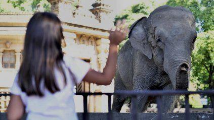 La travesía de una elefanta de Argentina a Brasil, contada por el New York Times