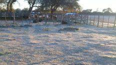 Imágenes de la helada en el paraje La Balsa de Villa Urquiza