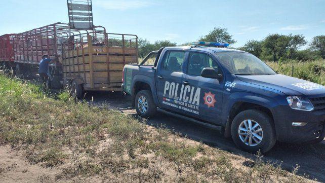 Ganado que iba rumbo a Santiago del Estero recuperado por la guardia rural Los Pumas