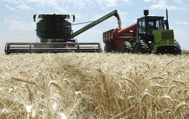 Impulso. El crecimiento de la producción de trigo respecto del año anterior influyó en la suba de actividad.