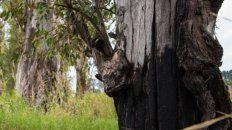 Complejo Paganini. Extraen árboles secos.