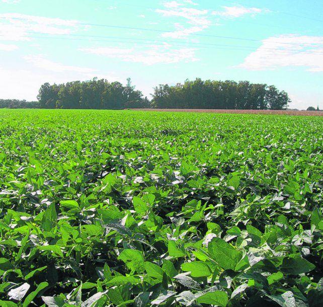 Soja: el beneficio económico de sembrar Intacta