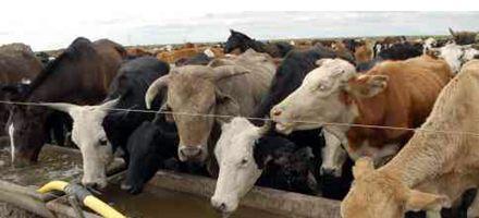La provincia busca estrategias para salir de la crisis agrícola ganadera