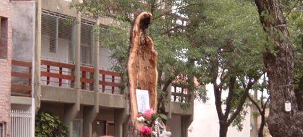 La imagen de la Virgen en un árbol convoca multitudes en Venado Tuerto