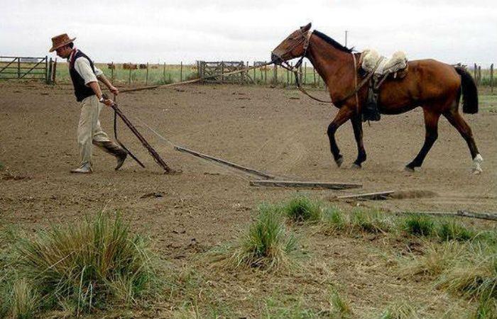 Un nene de seis años murió al caerse de un caballo en Puerto Gaboto