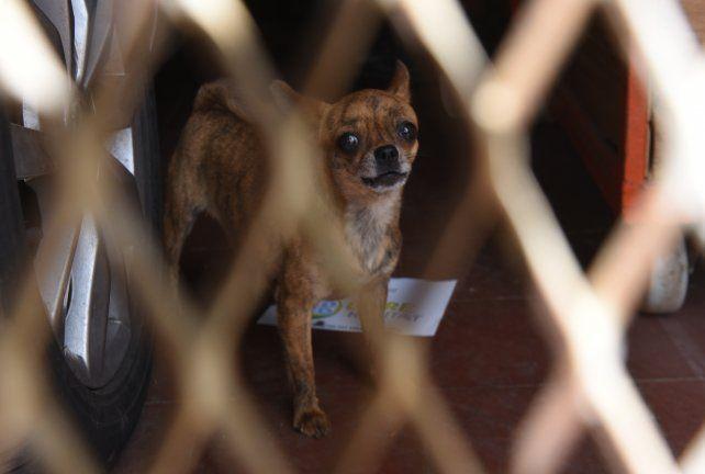 En el interior de una vivienda de avenida del Rosario al 2000 la Municipalidad y la policía encontraron la semana pasada 199 perros