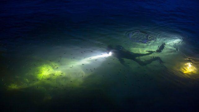 Buceo nocturno en las calidas playas de Pernambuco
