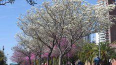 el tiempo en rosario: sol a pleno y clima calido para disfrutar de un sabado primaveral