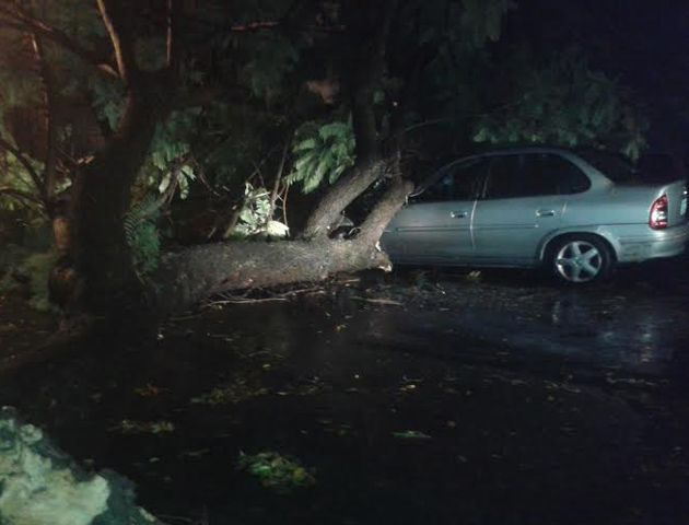 Un Chevrolet Corsa quedó atrapado bajo un frondoso árbol en Presidente Roca al 2300.