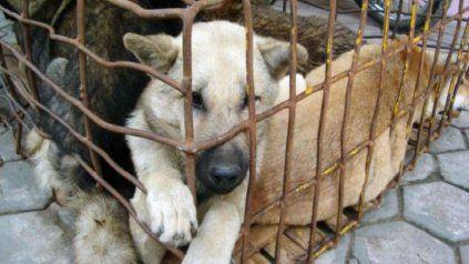 En Jujuy buscan que se reconozca a los animales como seres sintientes