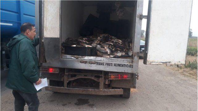 Los pescados eran transportados en condiciones paupérrimas.