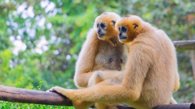 A la par. Los animales raramente buscan otra pareja.