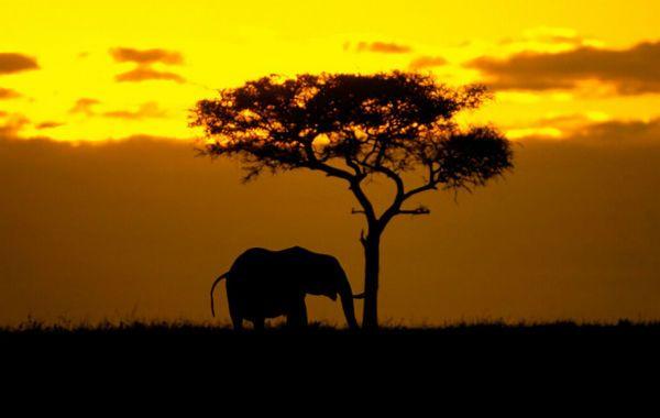 El tiempo tiene otro significado en el Kruger: el viajero puede pasarse todo el día en busca de los cinco grades y no cansarse.