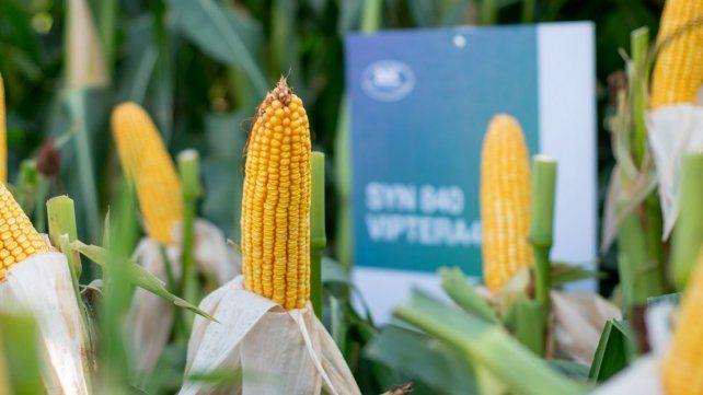 Opciones. NK ofrece buena agronomía