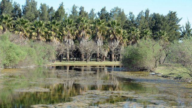Especies. En el lugar hay árboles y arbustos autóctonos y exóticos.