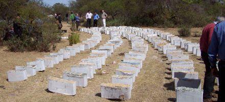 Golpe al narcotráfico en Santa Fe: hallan más de 2.500 kilos de marihuana