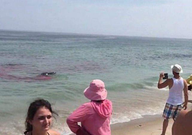 Salvaje ataque de tiburones a surfistas en una playa de Massachusetts