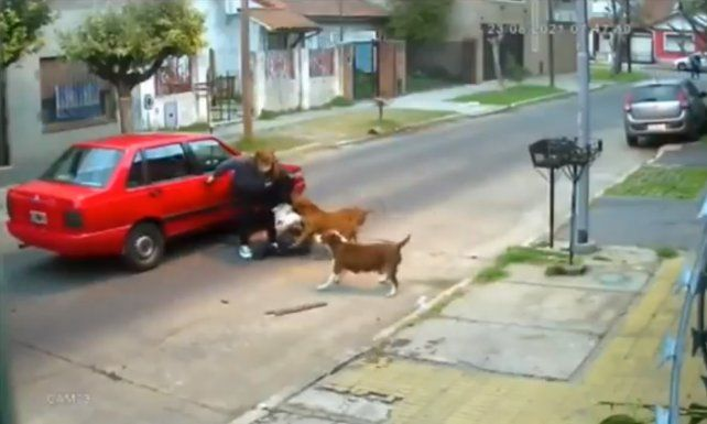 Video: tres perros pitbull atacaron a una mujer en la calle