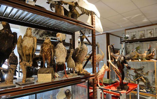 Puesta en valor. Los ejemplares de las distintas especies están en plena etapa de conservación y restauración.