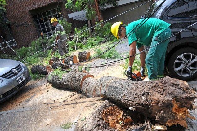 La caída de árboles resintió el suministro eléctrico.