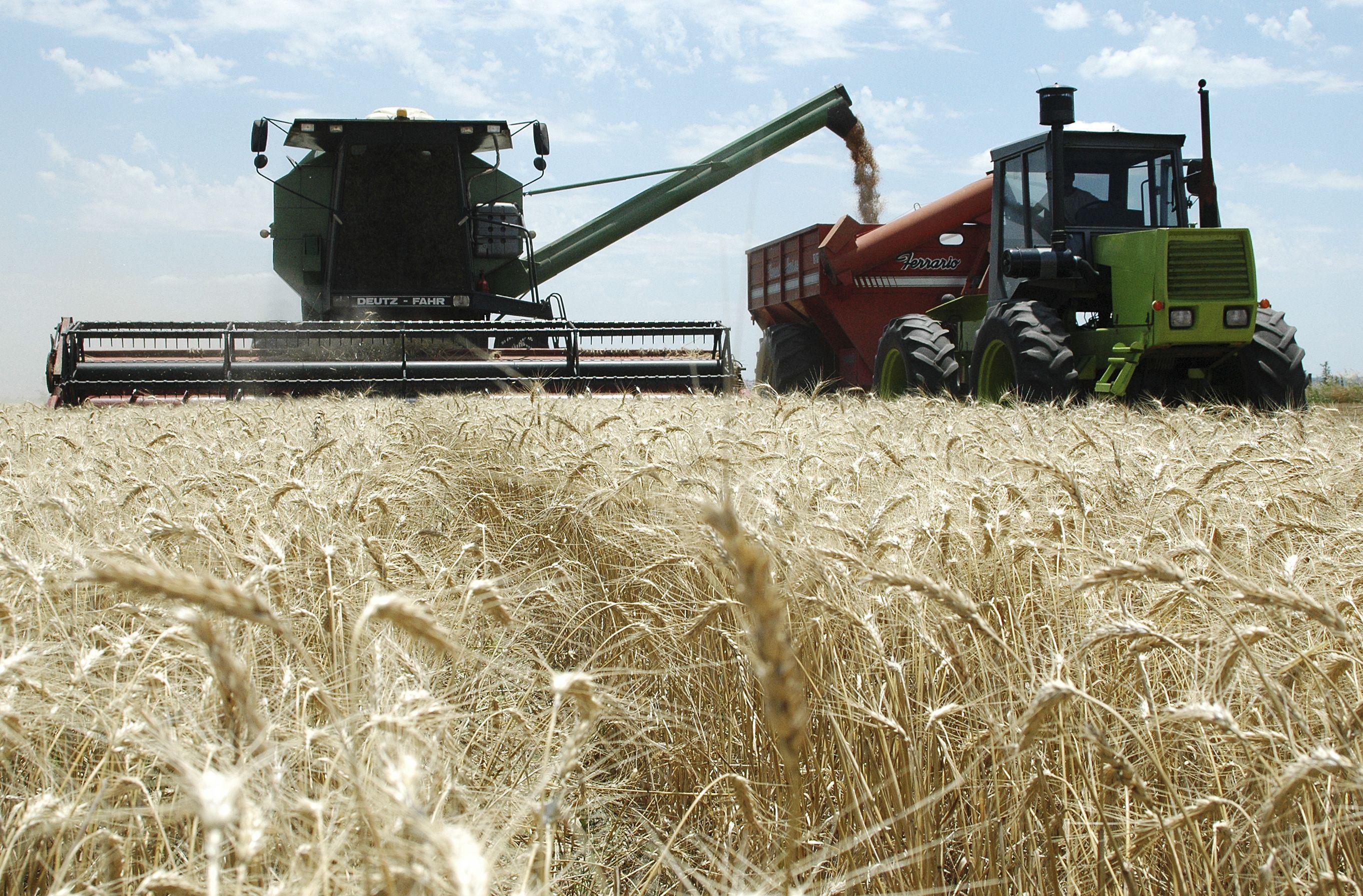 El gobierno nacional anunció la liberación de 500 mil toneladas de trigo para la exportación.