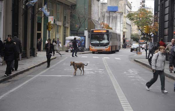 Mañana se sumarán nuevos tramos a los carriles exclusivos que dispuso la Municipalidad desde hace algunos meses. (Foto: Néstor Juncos)